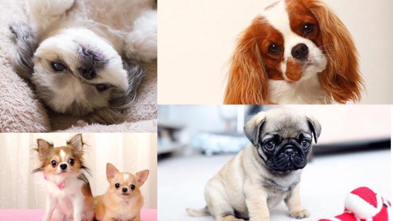 最啱香港人養嘅5種狗狗