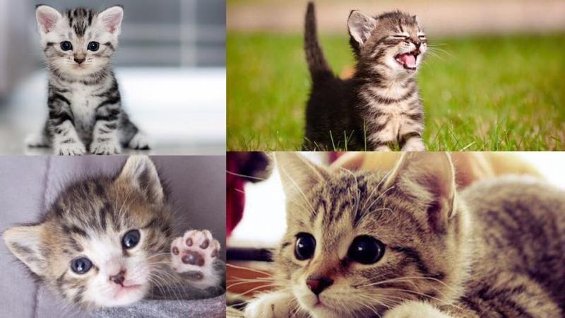貓奴一定要知!5個貓貓一直叫唔停的原因