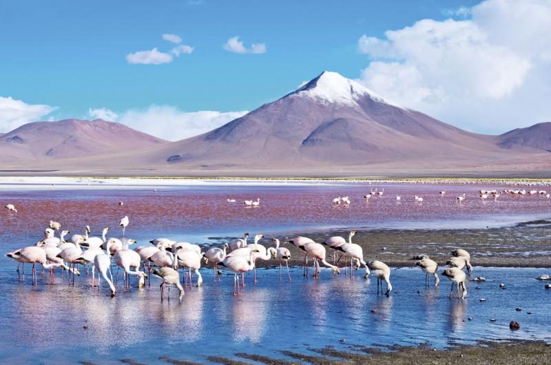 非一般蜜月假期︰秘魯及玻利維亞篇