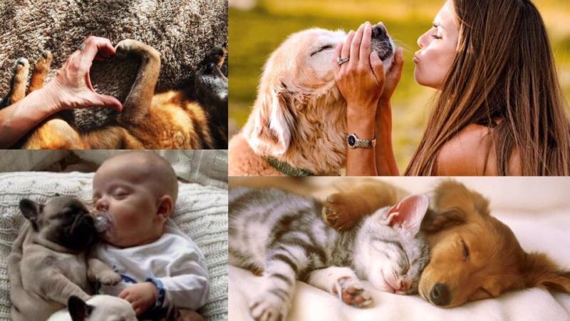 養寵物可以改善抑鬱病?6個養寵物的好處!
