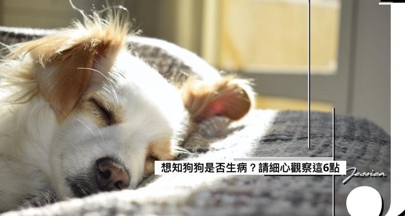 想知狗狗是否病了?狗主一定要細心觀察這6點