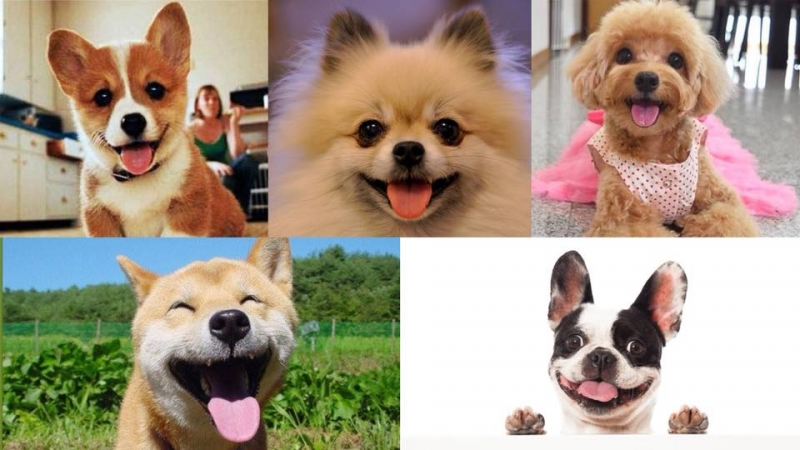迎接狗年!5種最具福相的汪星人