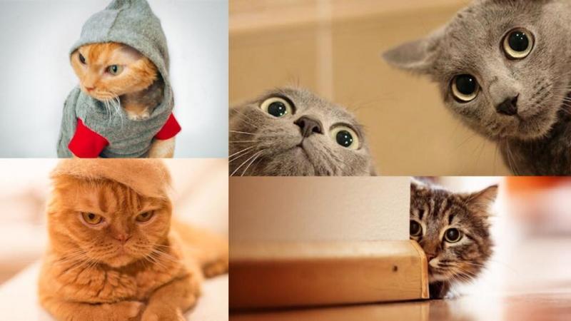 貓奴必須知!5個令貓咪最反感的行為