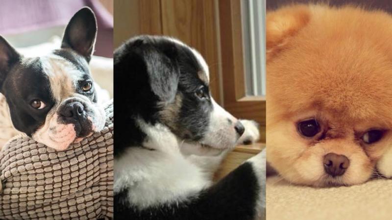 狗狗患上分離焦慮症點算好?5個改善方法你要知