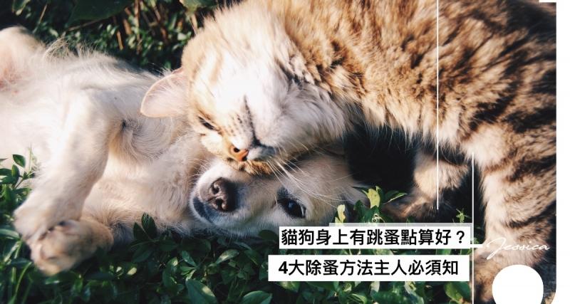 點樣解決貓咪身上的跳蚤?4大除蚤方法貓奴必須知!