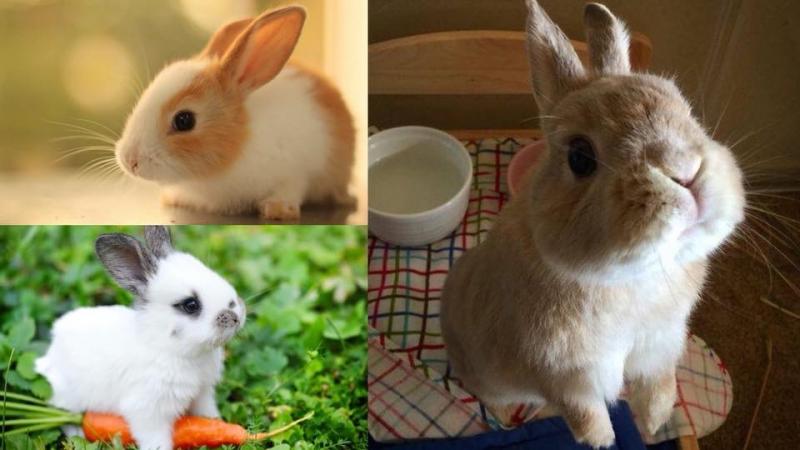 想兔仔健康成長?呢5個飼養重要事項你一定要知