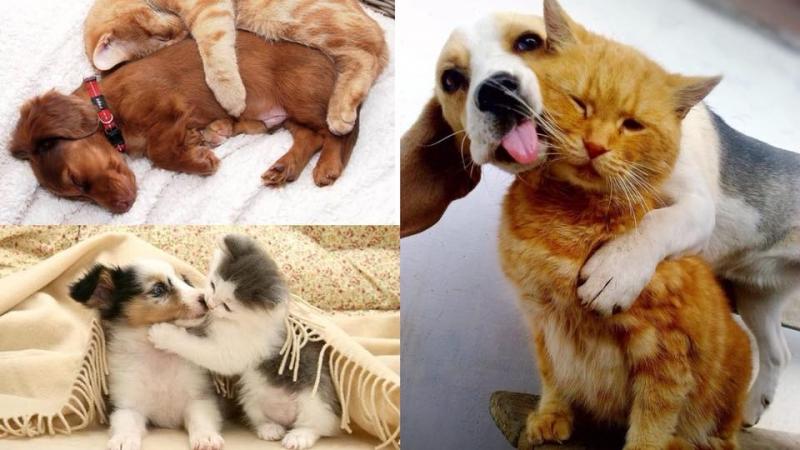 想貓狗融洽相處?以下7大要點你要知