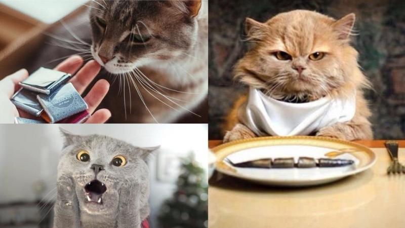 6種貓咪不能吃的東西!不然後果會很嚴重