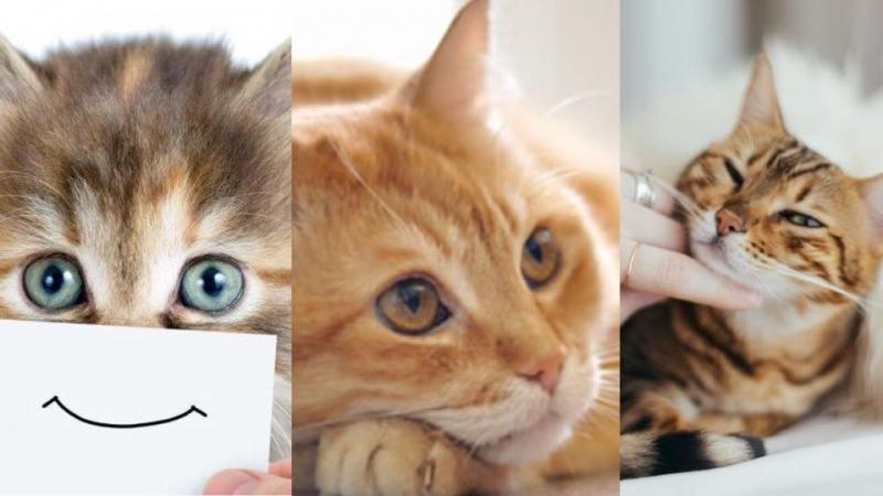 貓咪唔開心點算好?4個改善方法貓奴一定要知