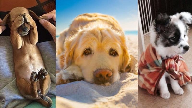 狗狗出現緊張情緒應該怎麼辦?必學3招幫汪星人減壓