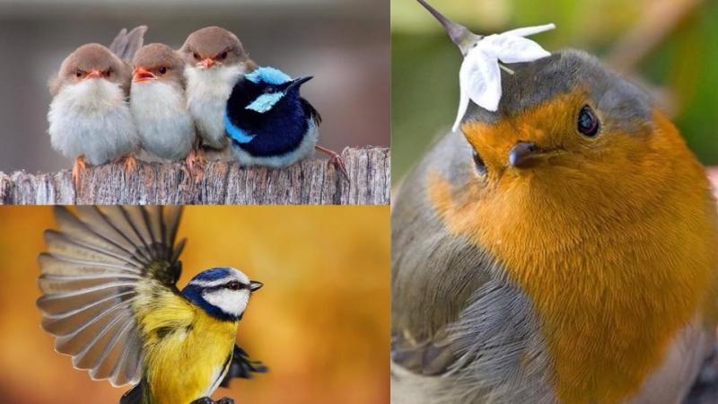 你了解雀鳥嗎?8個雀鳥身體語言主人一定要知