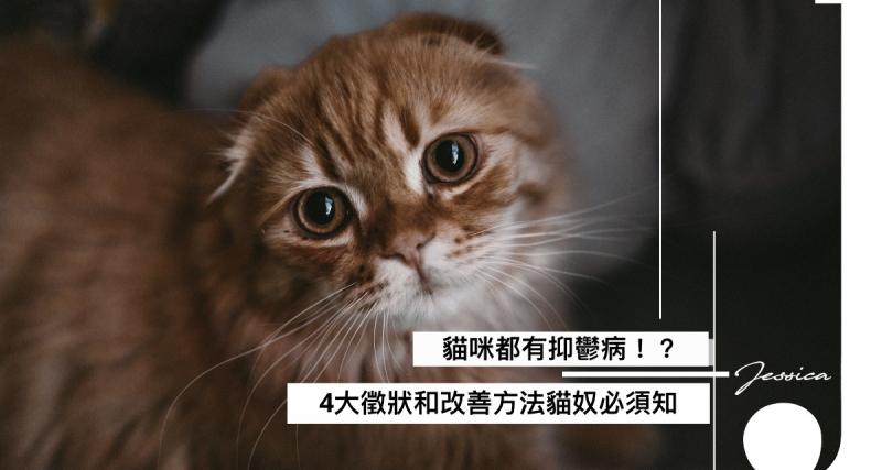 貓咪都有抑鬱病!4個改善方法你要知