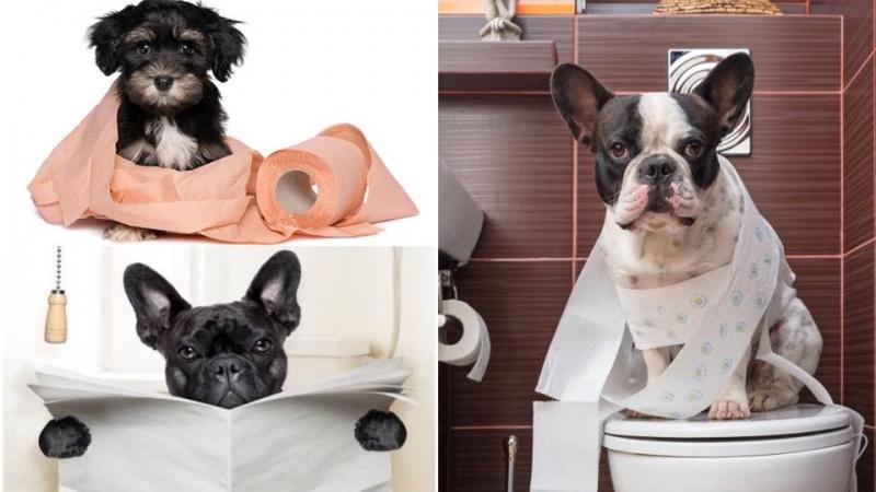 想狗狗懂得自己上廁所?以下5大訓練招數你要知