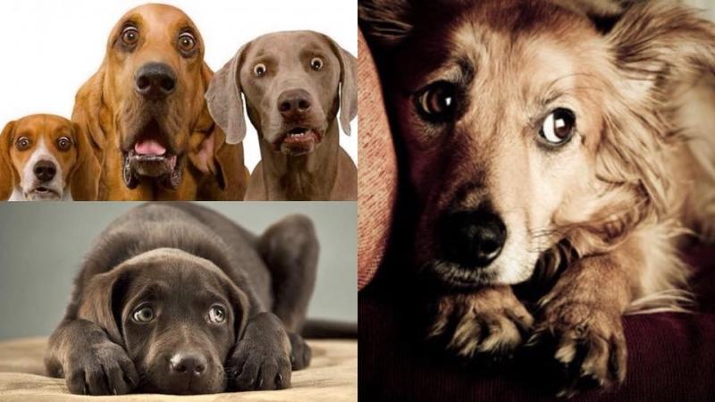 唔想嚇親狗狗?4件會讓牠們產生恐懼感的東西主人必需知
