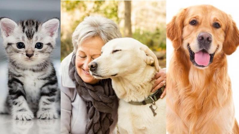 寵物過世後,主人應該如何處理自己的心情呢?