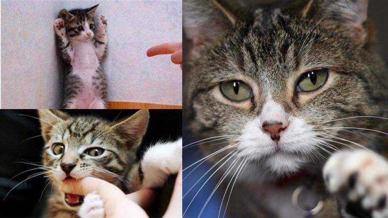 6個訓練方法令貓咪不再抓或咬傷你!
