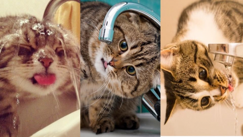 不想貓咪患上腎衰竭?7招飲水方法貓奴一定要知