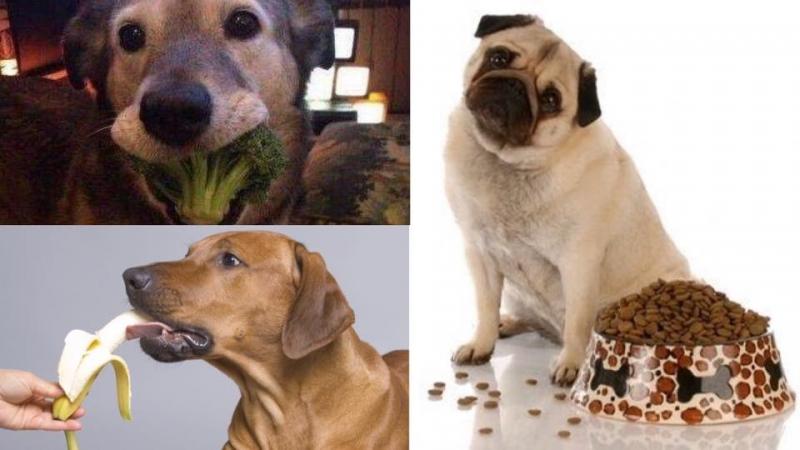 除了狗糧,原來汪星人都可以食呢6種食物!