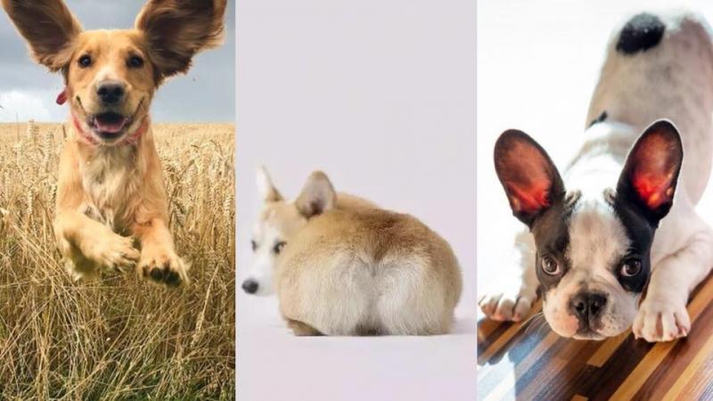破解狗狗體味重原因!主人要知5個改善方法