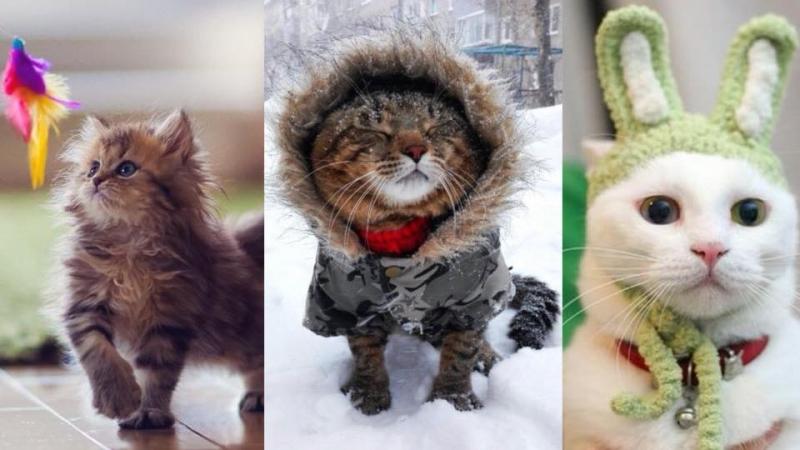 貓咪都怕凍!貓奴必睇5個喵星人保暖tips
