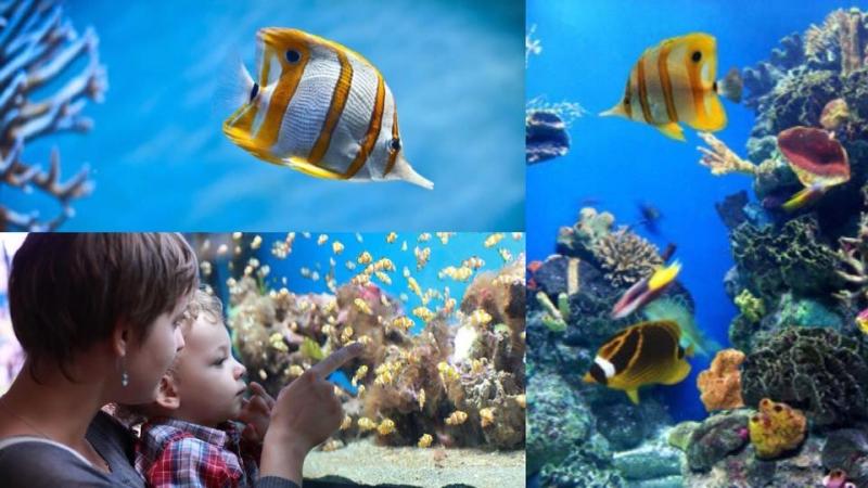 新手必須知!5個養熱帶魚的重要事項