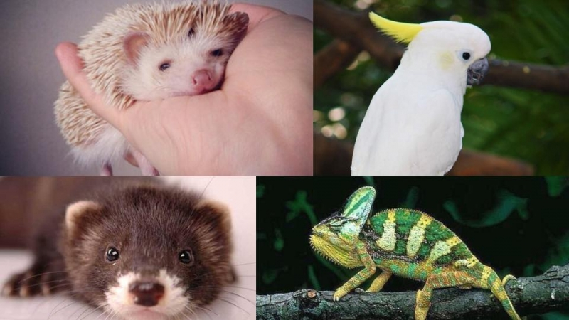 4種另類寵物你最鍾意哪一種?