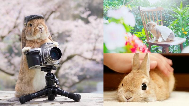 超治癒!把人融化的東京人氣兔子寫真展