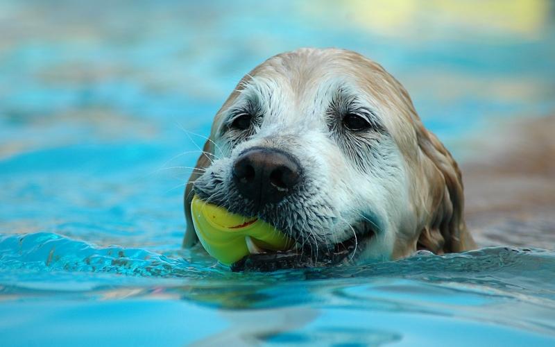 狗狗天生識游水?帶毛孩游泳5大注意事項