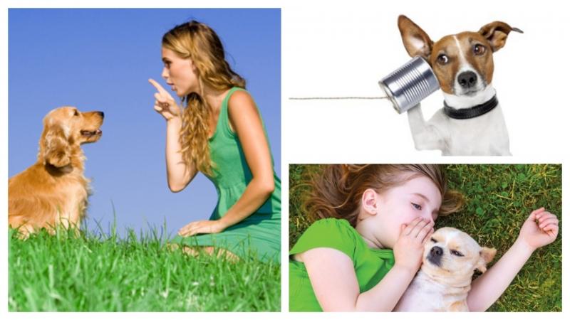 點解咁多人相信動物傳心師?