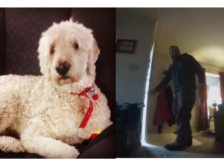 主人出門後,狗狗都在家做什麼?