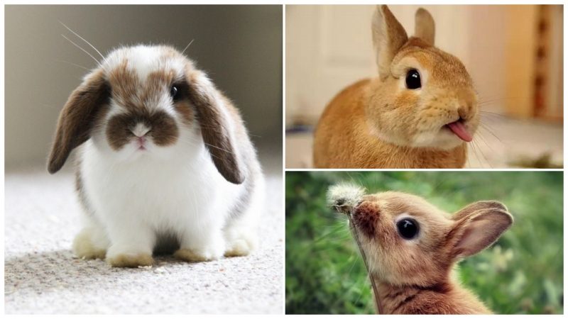 兔兔易養死?5大養兔攻略