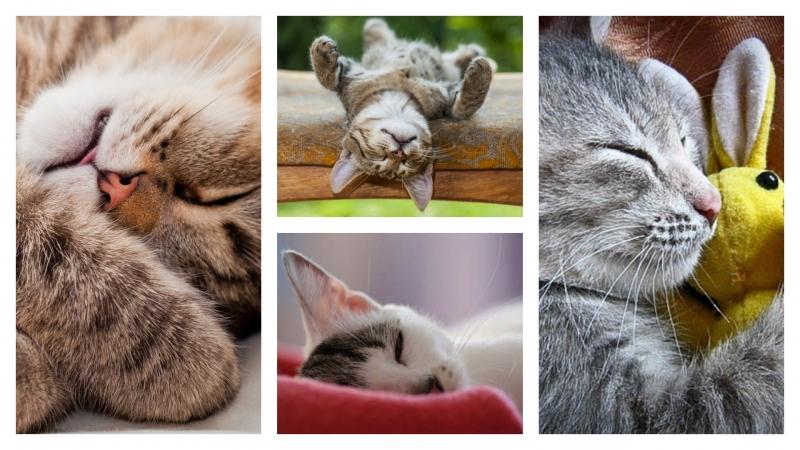 貓貓信任主人嗎?原來從睡姿可以看出來!